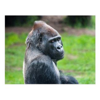 Gorila de tierra baja occidental postal