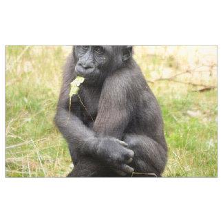 Gorila joven lindo telas