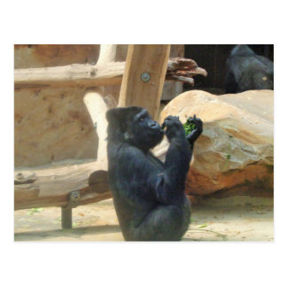 Gorila que come su almuerzo, animal, fauna, mono postal