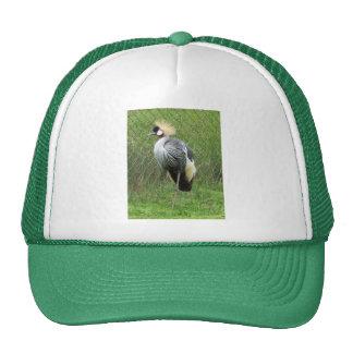 Gorra africano del este de la grúa de la corona