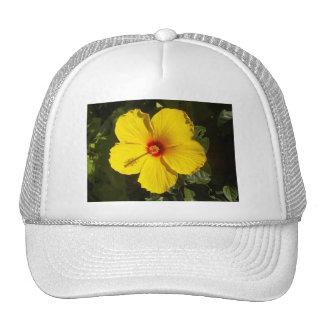 Gorra amarillo del hibisco