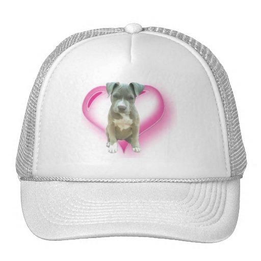 Gorra azul del perrito del pitbull