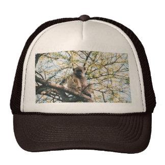Gorra con la imagen del babuino en árbol