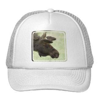 Gorra de béisbol de la foto de los alces