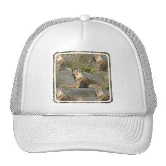 Gorra de béisbol de las imágenes del coyote