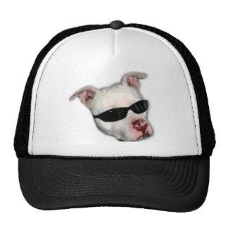 Gorra de béisbol de Pitbull