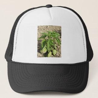 Gorra De Camionero Escoja la planta fresca de la albahaca que crece