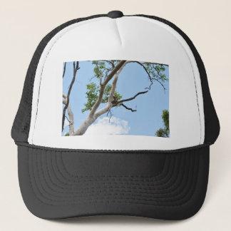 GORRA DE CAMIONERO KOALA EN EL ÁRBOL QUEENSLAND AUSTRALIA