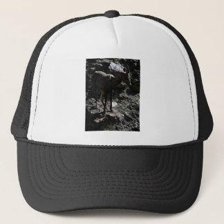 Gorra De Camionero Ovejas de Bighorn de la montaña rocosa, oveja