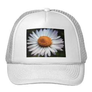 Gorra de la margarita 1
