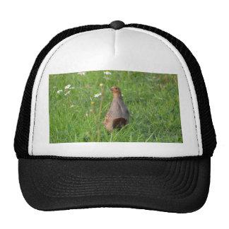 Gorra de la perdiz