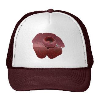 Gorra de Rafflesia