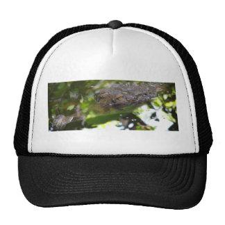 gorra de TecBoy.net - cocodrilo