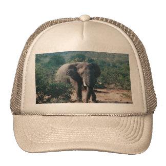 Gorra del camionero con la imagen del elefante