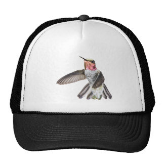 Gorra del colibrí de Ana masculino