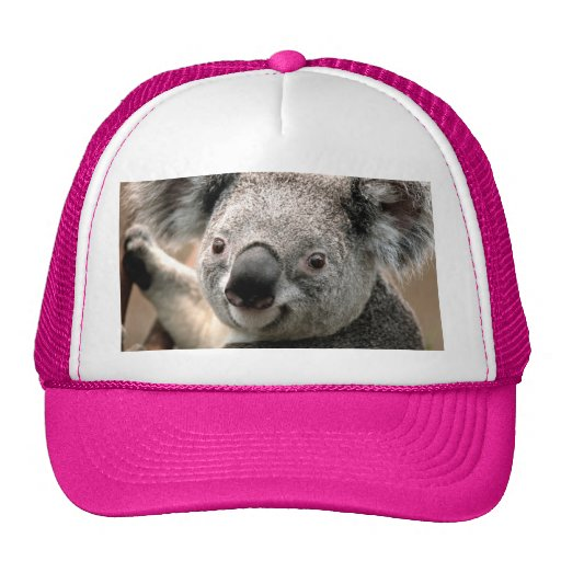 Gorra del oso de koala