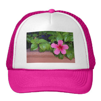 Gorra rosado de la foto de la flor