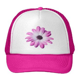 Gorra rosado, púrpura bonito de la flor de la marg