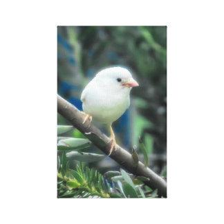 Gorrión del albino lienzo