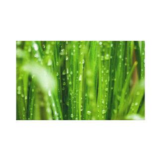 Gotas de agua en las cuchillas de la hierba lienzo