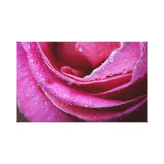 Gotas de agua en un color de rosa rosado lienzo