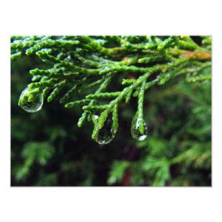 Gotas de agua en una rama de árbol (#2) impresión fotográfica