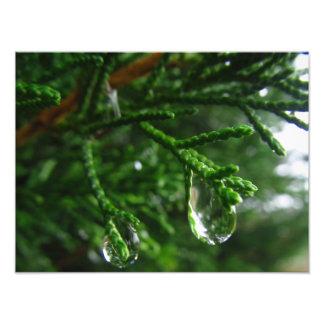 Gotas de agua en una rama de árbol impresiones fotograficas