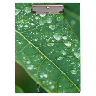 Gotas de lluvia en la hoja tropical de la papaya carpeta de pinza