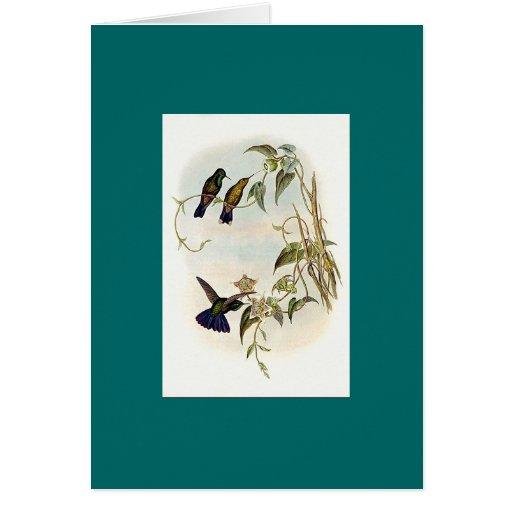 Gould - colibrí de la Violeta-Cola Felicitaciones