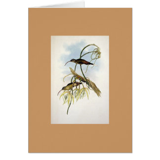 Gould - colibrí mexicano del ermitaño felicitación