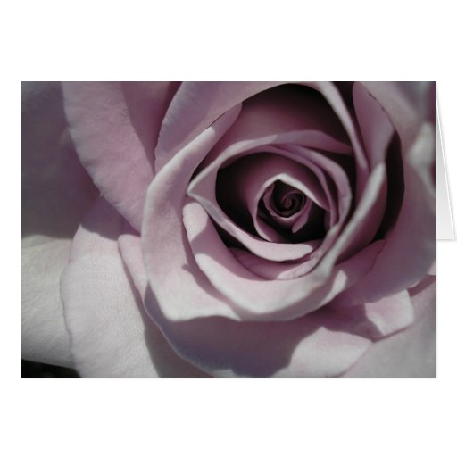 Gracias - capullo de rosa - modificado para requis felicitacion