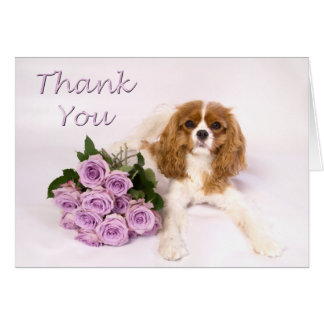Gracias los rosas arrogantes del perro de aguas de tarjeta de felicitación