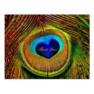 Gracias ojo de las plumas del pavo real del amor postal