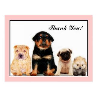 Gracias postal de los perritos