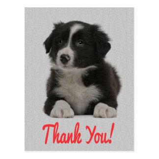 Gracias postal del perro de perrito del border