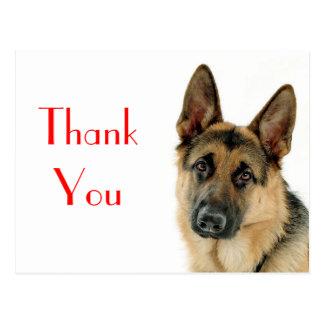 Gracias postal del perro de perrito del pastor