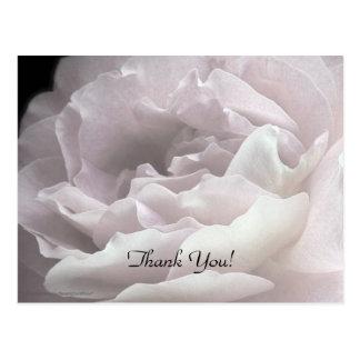 Gracias postal, pálida - color de rosa rosado postal