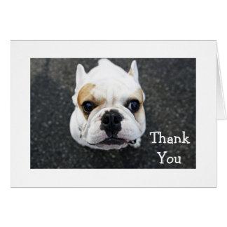 Gracias tarjeta de felicitación del dogo - verso