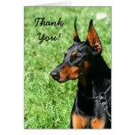 Gracias tarjeta de felicitación del Pinscher del D