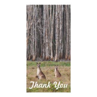 Gracias tarjeta de la foto - canguros australianos