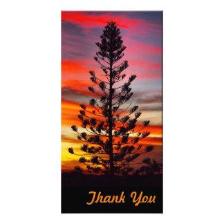 Gracias tarjeta de la foto - puesta del sol del