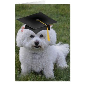 Graduación negra del casquillo de Bichon Tarjeta De Felicitación