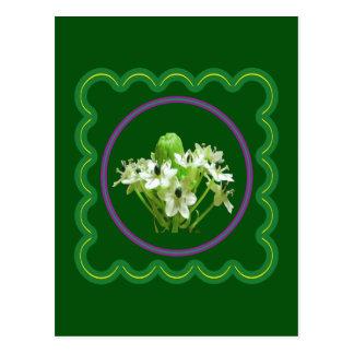 Gráfico floral elegante de la flor blanca en 100 postal
