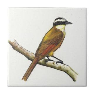 Gran Kiskadee en lápiz del color: Pájaro: Fauna Azulejo Cuadrado Pequeño