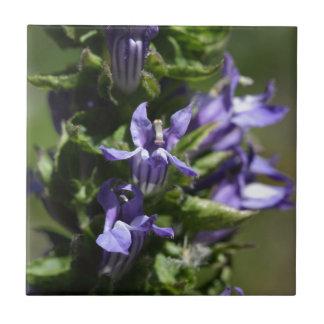 Gran Lobelia azul (siphilitica del Lobelia) Azulejo Cuadrado Pequeño