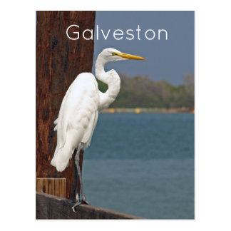 Gran postal blanca del Egret