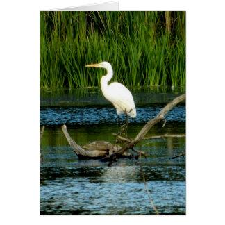 Gran tarjeta de felicitación blanca del Egret