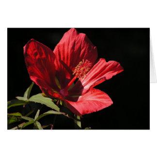 Gran tarjeta roja del hibisco (coccineus del