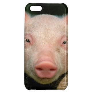 Granja de cerdo - cara del cerdo