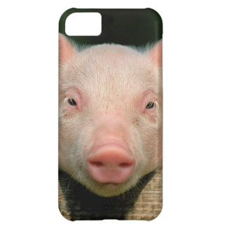 Granja de cerdo - cara del cerdo funda para iPhone 5C